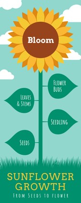 Seed to Flower Timeline Infographic