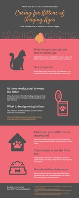 Pink and Grey Caring for Kittens Process Infographic