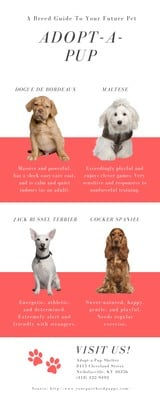 Adopt a Pup Breed Charity Infographic
