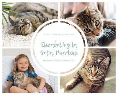 Collage de fotos de mascotas